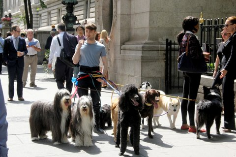Daniel Radcliffe and Marisa Tomei are surrounded by poodles as they film a scene for their upcoming film 'Trainwreck' at a park in NYC