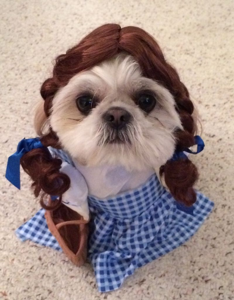 19 Pets In Movie Halloween Costumes That Will Kill You